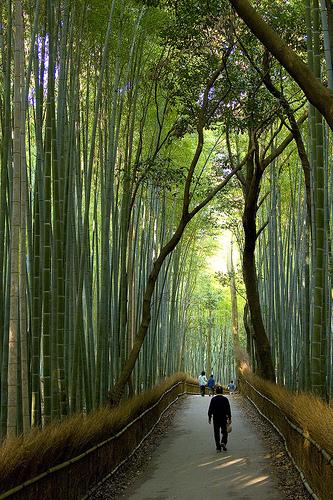 ... Tubes psp bambu~ ~cheech and chong big bambu myspace layouts ...